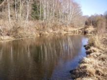 Entretien des abords d'étang